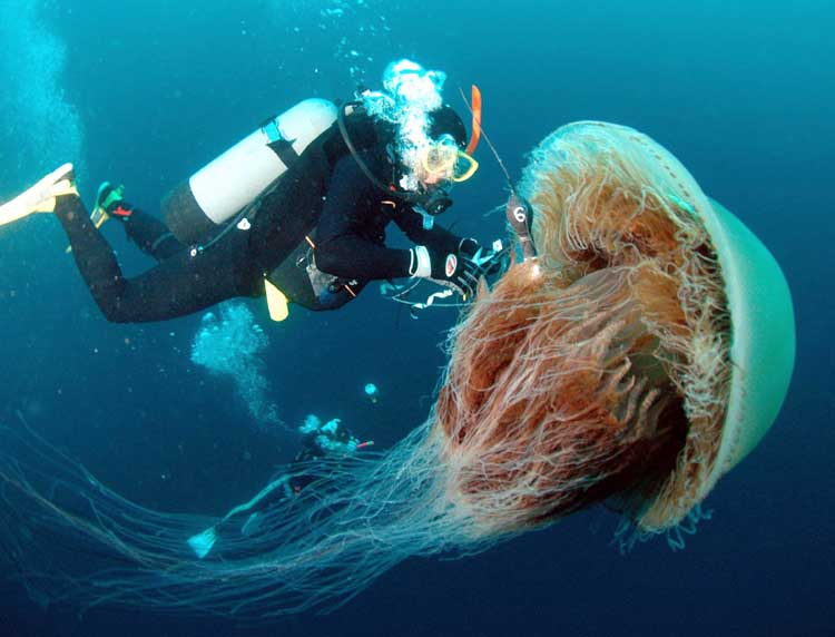 How Do Jellyfish Eat Their Food