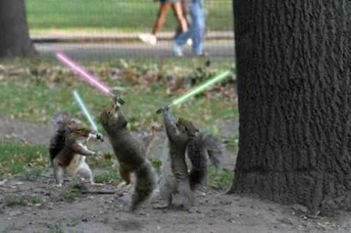 Squirrel Battle