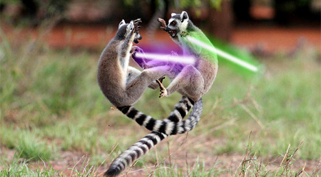 yayomg-lemurs-with-lightsabers