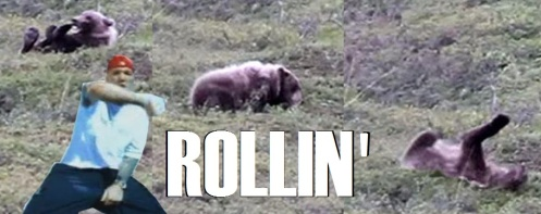 bear keep roll